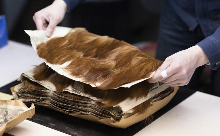熊野中村の筆に使用される毛の種類